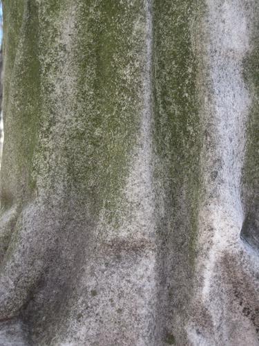 Налет водорослей на вазе (западная сторона)