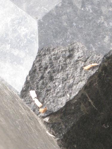 Выбоина неизвестного происхождения на плите (южная сторона)