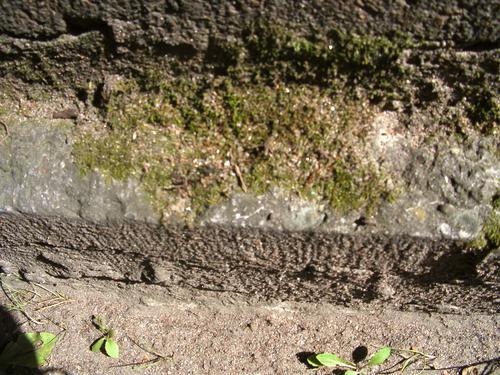 Мох на фундаменте из серого плитчатого известняка. Северная сторона. Май 2011