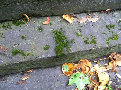 Наростание мха на фундаменте из серого плитчатого известняка. Восточная сторона фундамента. Май 2011.