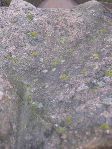 Налет водорослей и лишайников на камне (восточная сторона)