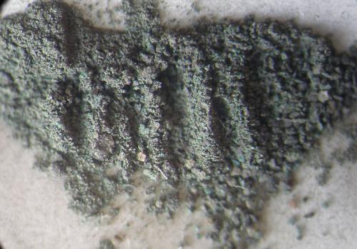 7. Тонкозернистый  порошок светлого серо-зеленого цвета, присутствуют зеленые зерна   ~ 0,1 - 0,8 мм.