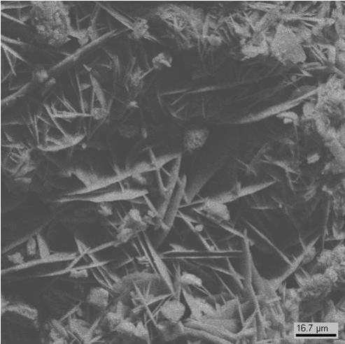 Между кристаллами гипса видны многочисленные микроорганизмы (клетки водоросли, гифы грибов) (образец №7)