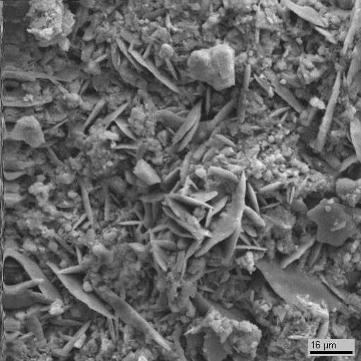 Электронномикроскопический снимок поверхности образца 3. Видны  пластинчатые кристаллы гипса, округлые клетки водорослей, а также скопления тонкодисперсного неорганического вещества с вероятным включением в него элементов биогенного происхождения. Видны отдельные обломки мрамора.