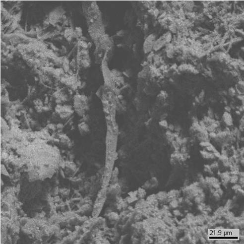 Между кристаллами гипса видны многочисленные микроорганизмы (клетки водоросли, гифы грибов) (образец №5).