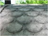 Образец №1 С горизонтальной поверхности крышки саркофага.  Penicillium citrinum