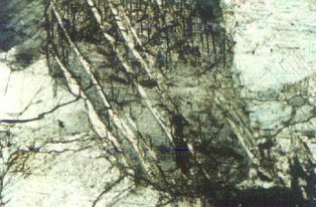 Фотография шлифа образца №2. Николи скрещены. Увеличение: ×80. Мрамор белый крупнозернистый (размер зерен 1-3 мм). Зерна арбоната хорошо кристаллизованны. Отчетливо видны спайность по ромбоэдру и двойниковые полости.