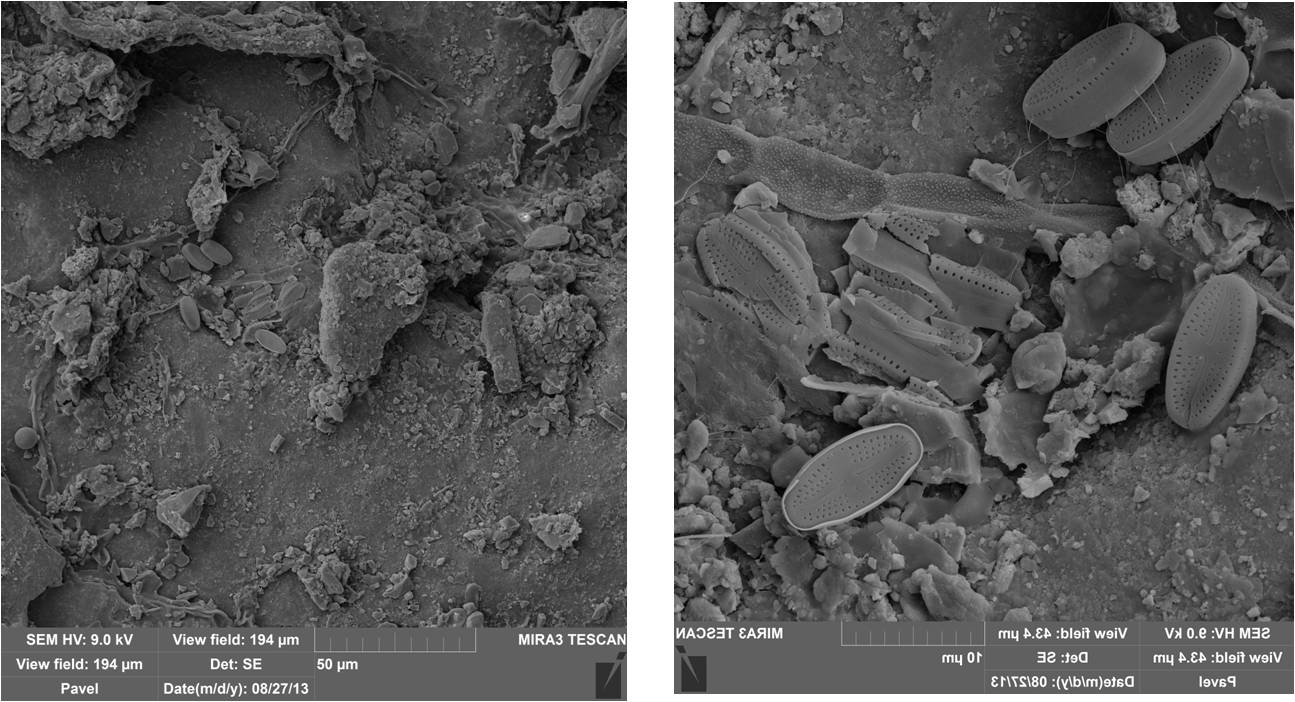 СЭМ-изображения фрагментов поверхности кварцита(обр.35). Грибные гифы и клетки диатомовых водорослей на поверхности камня