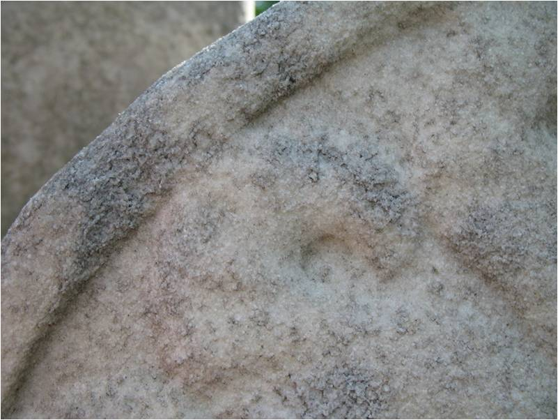 Образец №1  Aureobasidium pullulans Alternaria alternata