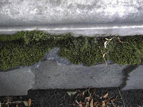 Восточная сторона.Видно развитие мха по контуру надгробной плиты
