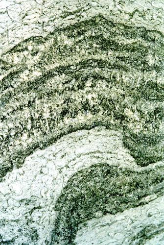 Фрагмент мемориальной плиты из серого, полосчатого, узорчатого, мелко-, среднезернистого мрамора. Фото ноября 2003 г.