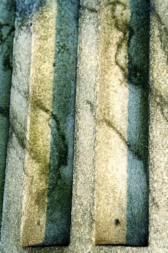 Фрагмент нижней полуколонны. Видно отшелушивание, развитие микротрещин, налеты биологического происхождения. Фото ноября 2003 г.