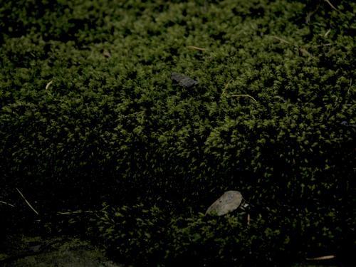 Крышка саркофага. Южная сторона. Виден сплошной налет из мха. Фото ноября 2003 г.