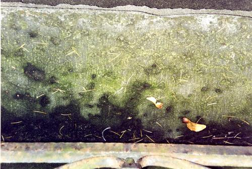 Основание памятника из путиловского известянка. Видно развитие питтинга. Фото ноября 2003 г.